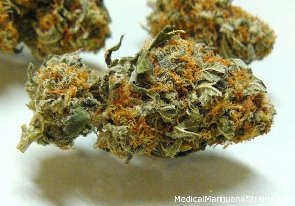 White Skunk
